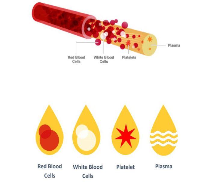 PRP Eigenblut Therapie